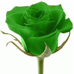pots-fleurs-planteurs-rose-verte-des-graines-rainbow-rose-belle-fleur-bonsa-plantes-semences-graines-pour.jpg_640x640