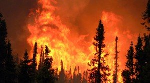 Incendie-Foret-2753-2012-08-29